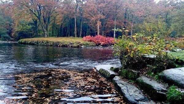 autumn-river-dart-deeper-marsh