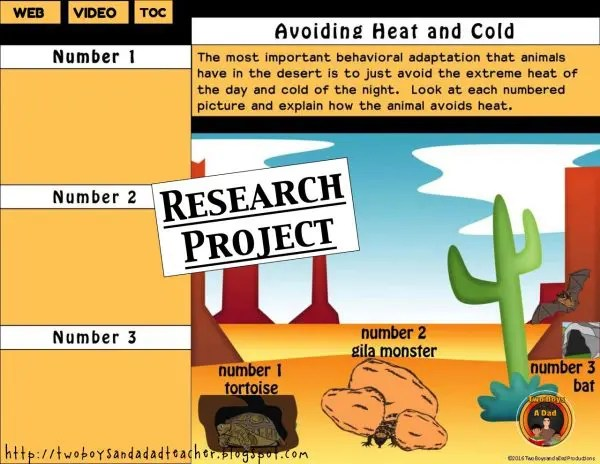 desert animals adaptations research project slide