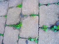 How to keep weeds from growing in pavers