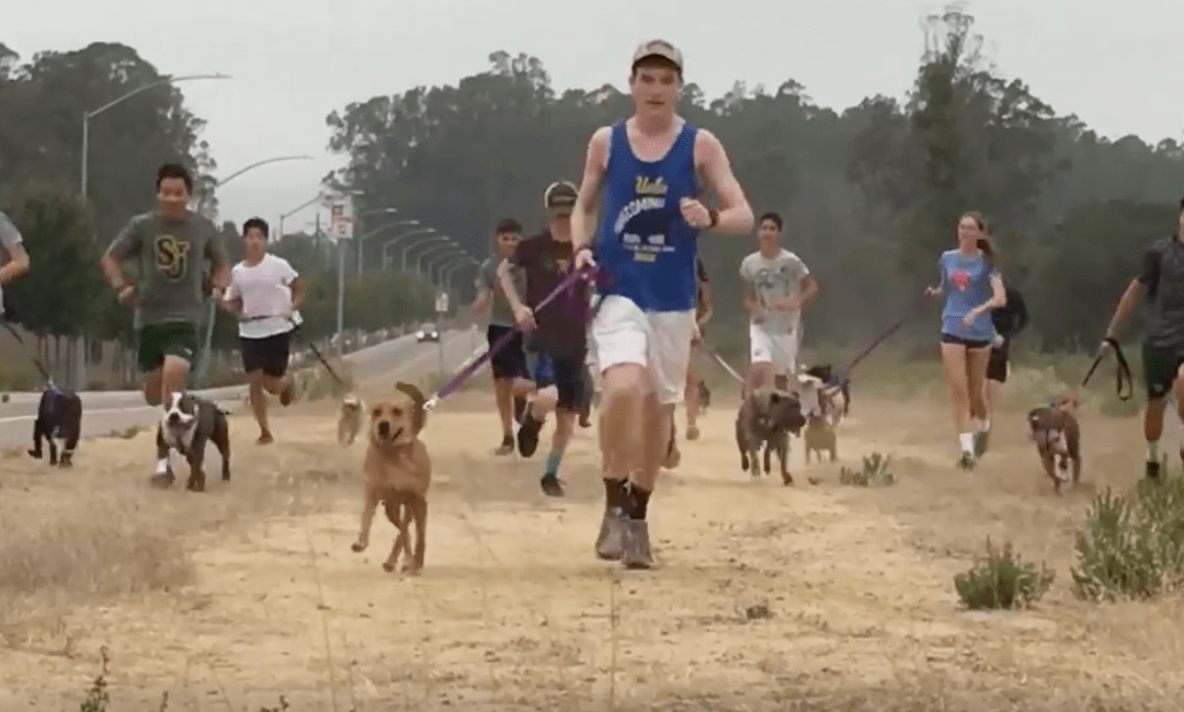 High School Cross-Country Team Invites Shelter Dogs On Their Run
