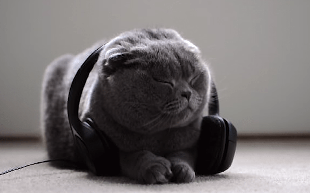 Meet The Classical Musician Who Makes Music Specifically For Cats