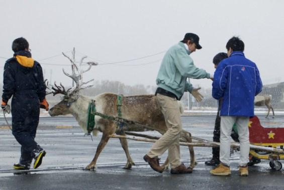 dominos-reindeer-2.jpg