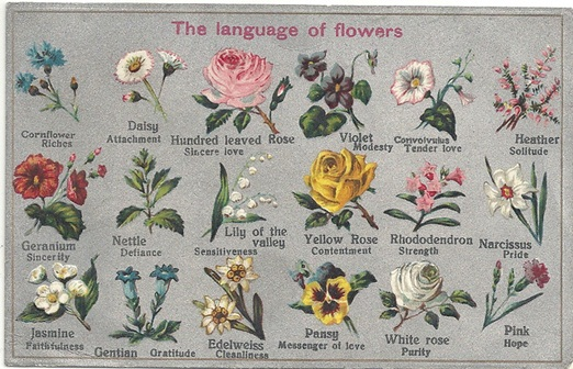 The Language Of Flowers Two Chums