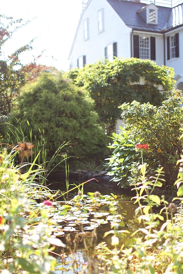 allison pond blog