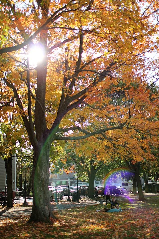 tree in park blog