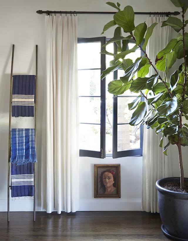 blanket-ladder-fig-tree