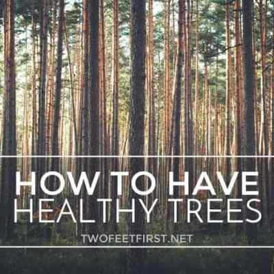 healthy trees