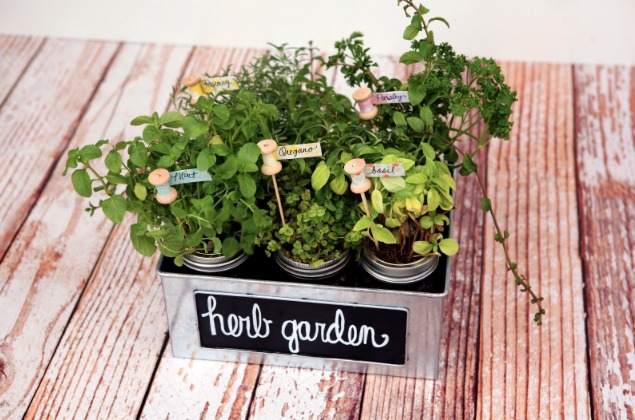 8 Darling DIY Herb Garden Gifts DIY Gifts For Foodies Week Two