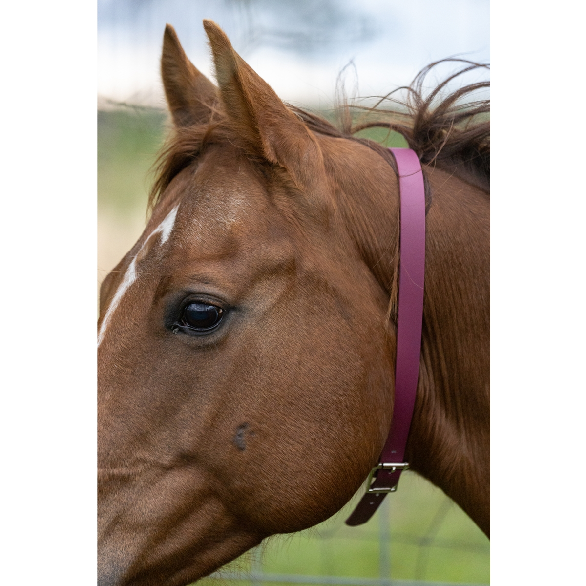 Shop Turnout Neck Collar with Leather Breakaway from Two