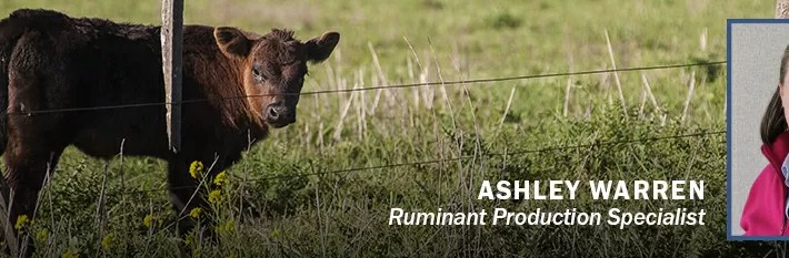 Greener Pastures: Maintaining Pasture & Cow/Calf Health