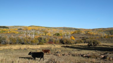 Aquarius Plateau - Utah