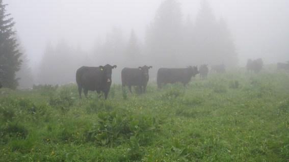 Pré de l'Haut - Vaud - Suisse