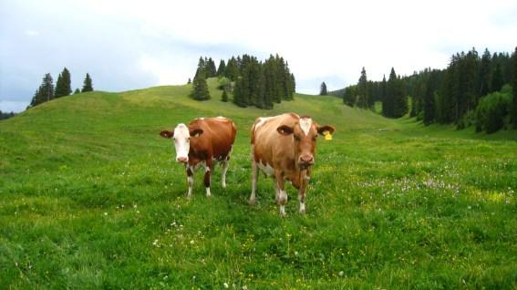 Combe des Amburnex - Le Chenit - Vaud - Suisse