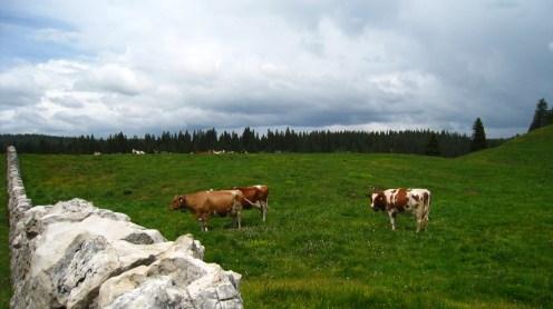 Combe des Amburnex - Vaud - Suisse