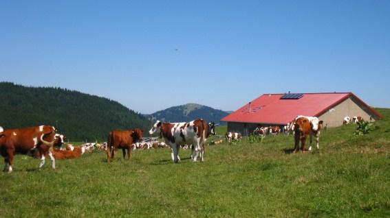 Buvette de Châtel - Vaud - Suisse