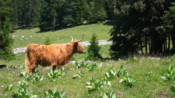 Buvette des Croisettes - Vaud - Suisse