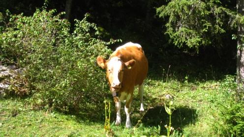 Pré de l'Haut-Dessus - Vaud - Suisse
