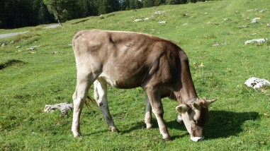 Pré de l'Haut-Dessous - Vaud - Suisse