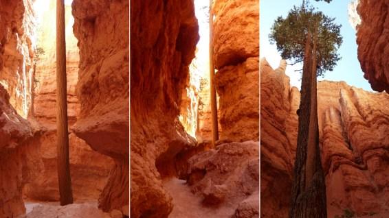 Wall Street - Bryce Canyon - Utah - États-Unis