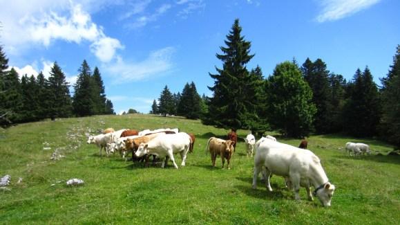 Grande Combe - Jura Vaudois - Suisse