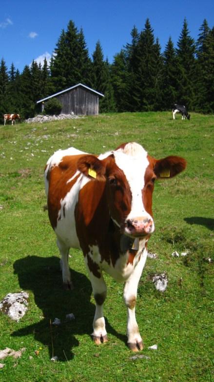 Couvert du haut de la Lande Dessus - Le Chenit - Vaud - Suisse - Le Chenit - Vaud - Suisse