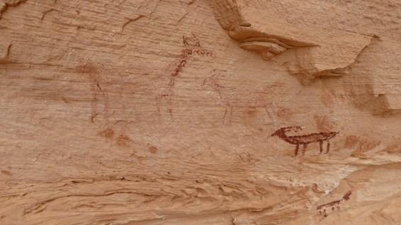 White Canyon - Natural Bridges National Monument - Utah