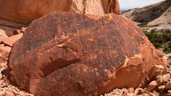 Monarch Cave Canyon - Butler Wash - Cedar Mesa - Utah