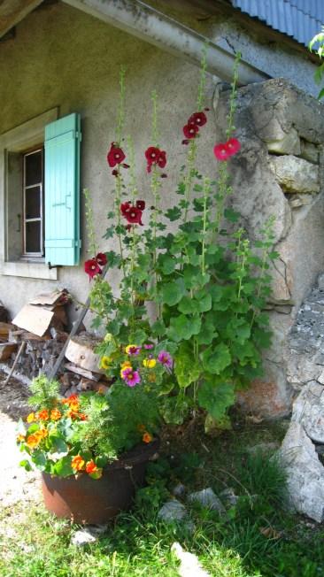 Petites Chaumilles - Vaud - Suisse