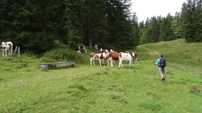 Non loin du Mondion - Vaud - Suisse