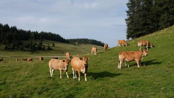 Entre le Couchant et les Bégnines - Vaud - Suisse