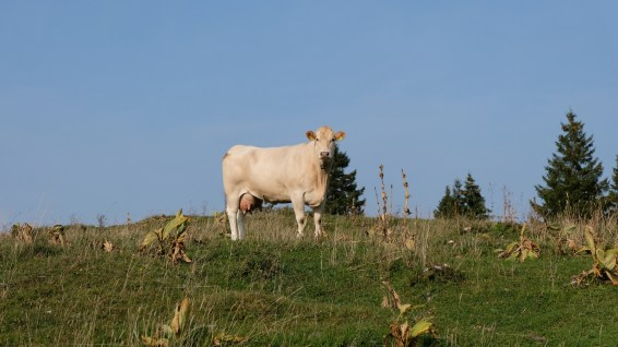 Sapelet Dessus - Vaud - Suisse