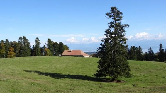 Prés de Joux - Vaud - Suisse