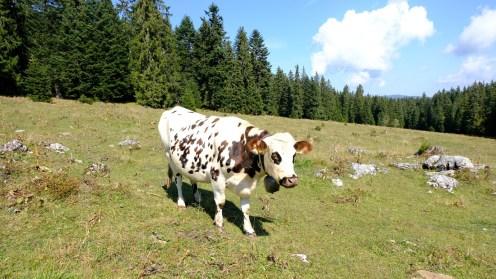 Combes Trebille - Vaud - Suisse