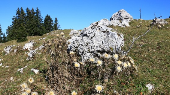 Mont Sâla - Arzier-Le Muids - Vaud - Suisse