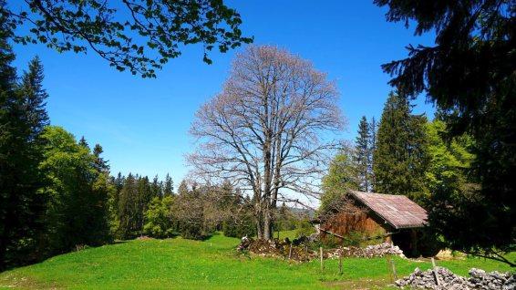 Couvert des Croisettes - L'Abbaye- Vaud - Suisse