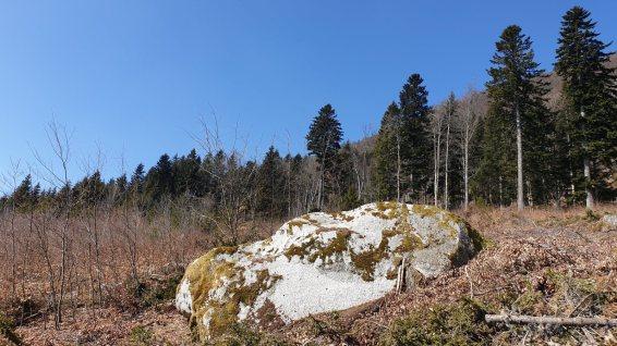 Bloc erratique du Petit-Chardévaz - Montricher - Vaud - Suisse