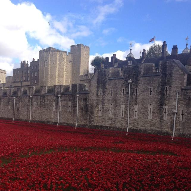 Another view of the Tower Poppies