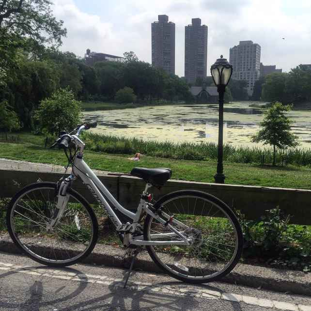 At the bottom of the biggest downhill while biking in Central Park you see the Harlem Meer.