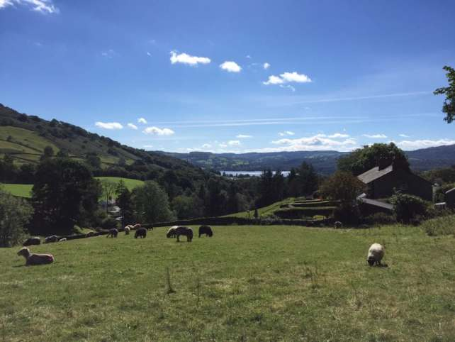 """Sheep where everywhere, even in some of the fields we walked through. - """"An Introduction to England's Lake District"""" - Two Traveling Texans"""