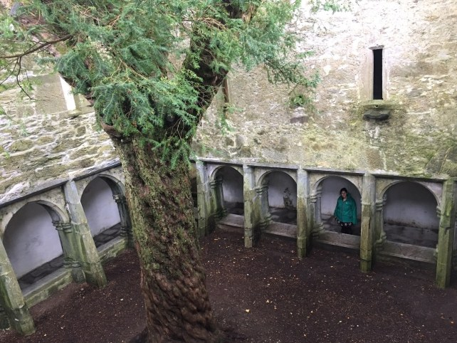 "Yes that is a tree inside the abbey. Can you spot Anisa? - ""What to See When You Visit Killarney National Park"" - Two Traveling Texans"