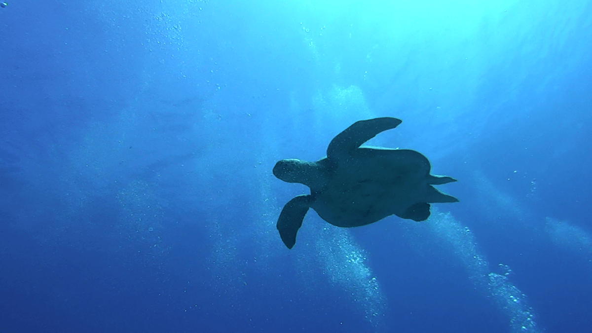 Sea turtle in Sharm