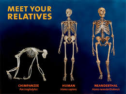 Meet your relatives