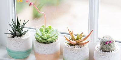 PlantsOP