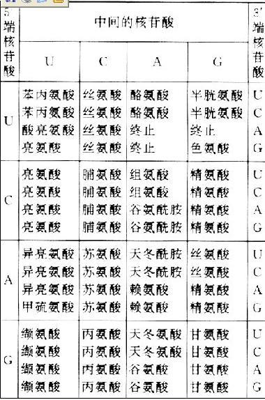 遺傳密碼- 臺灣Word