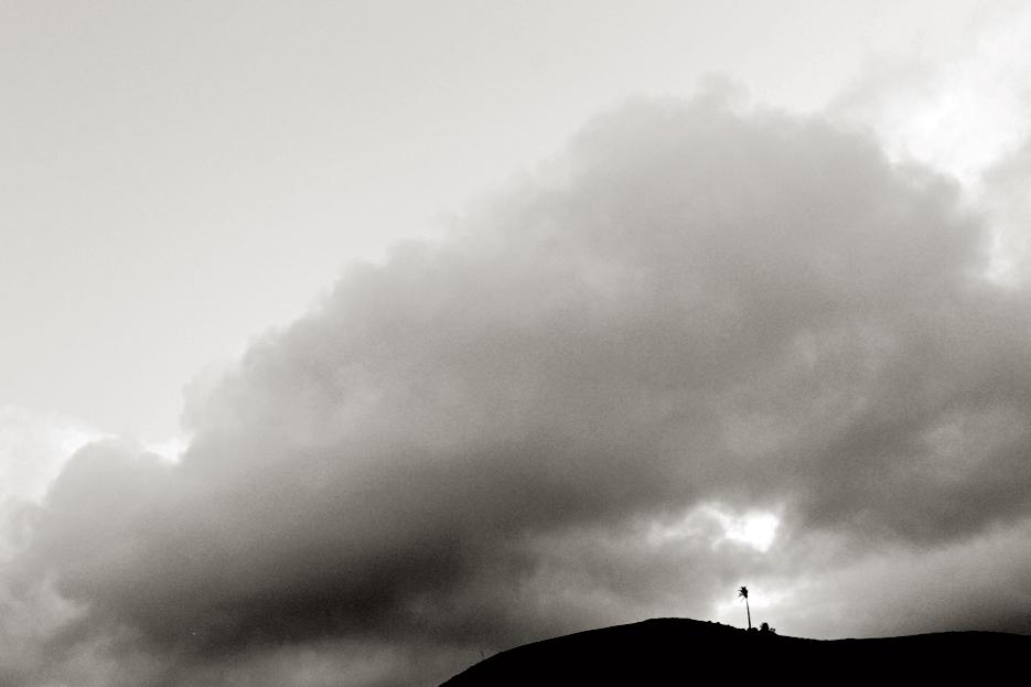 La soledad de la palmera. Yaiza.