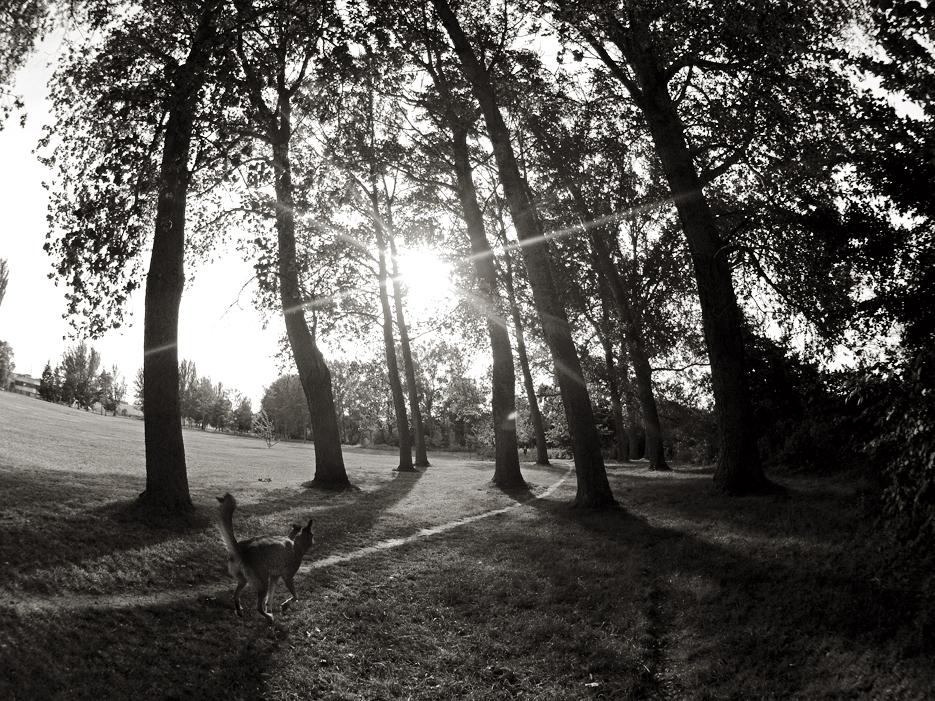 Los árboles de mi infancia