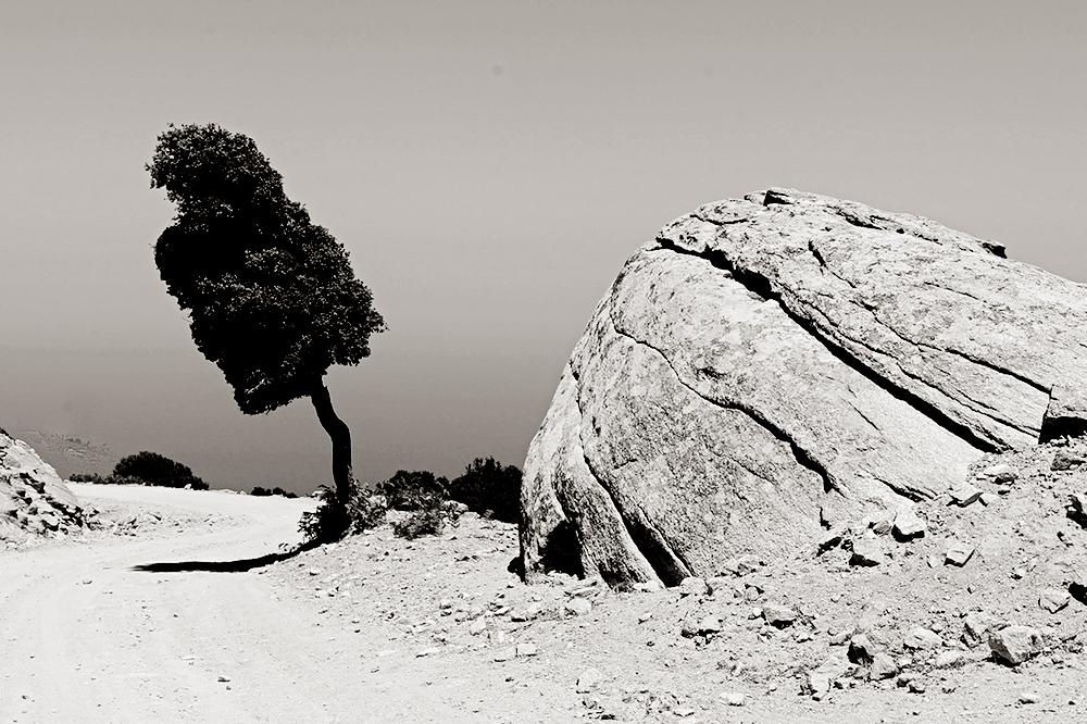 Si inclinas la cabeza el árbol está recto
