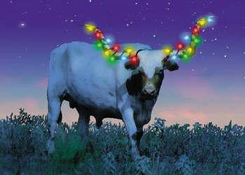 Christmas Cards Texas Longhorn With Lights