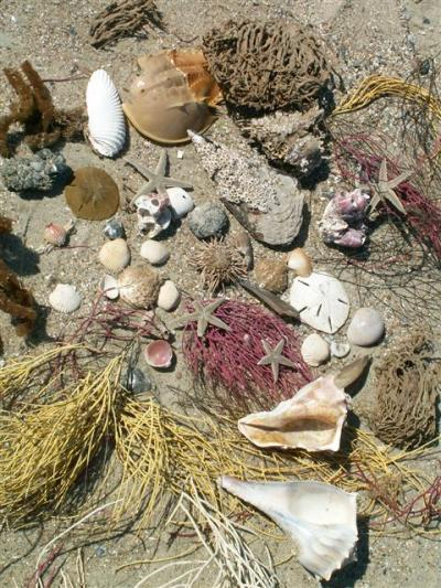 Tybee Joy VacationsTybee Beach Ecology Trips - Tybee Joy ...