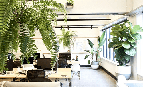 Introduce nature to your office